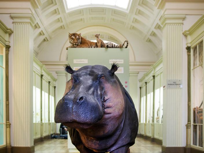 museum voor natuurhistorie